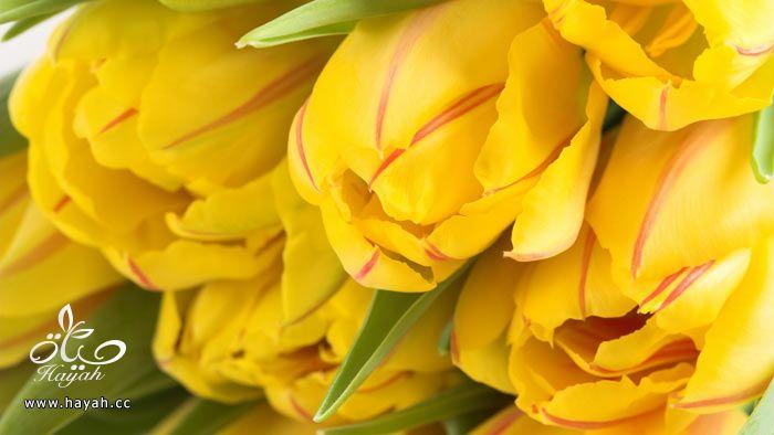 زهور جمیله hayahcc_1365952684_306.jpg