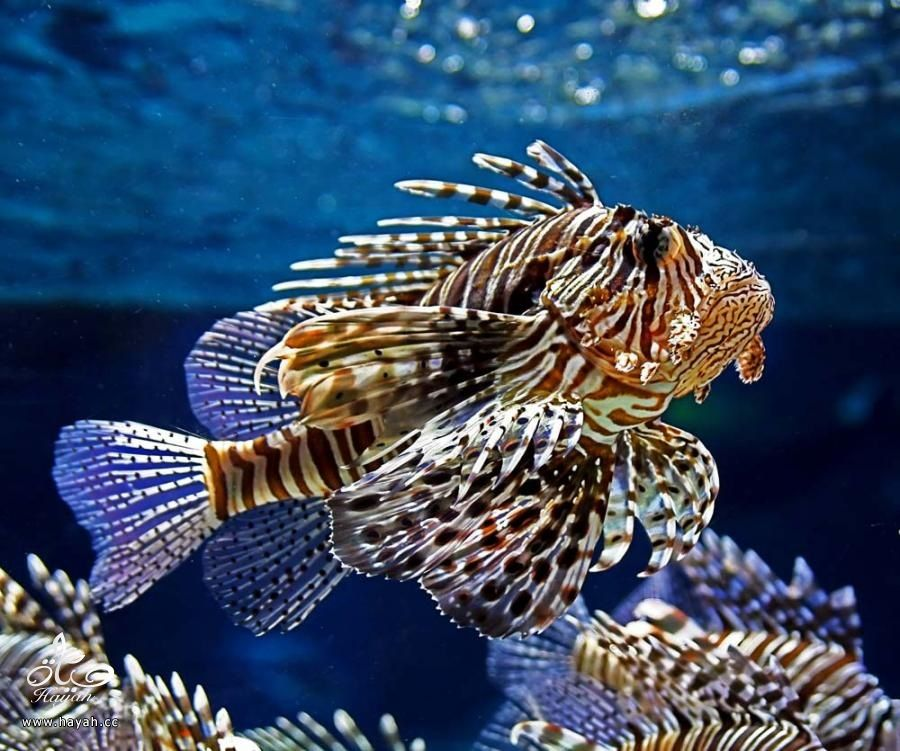 صور جمیله من عالم البحار hayahcc_1366730964_817.jpg
