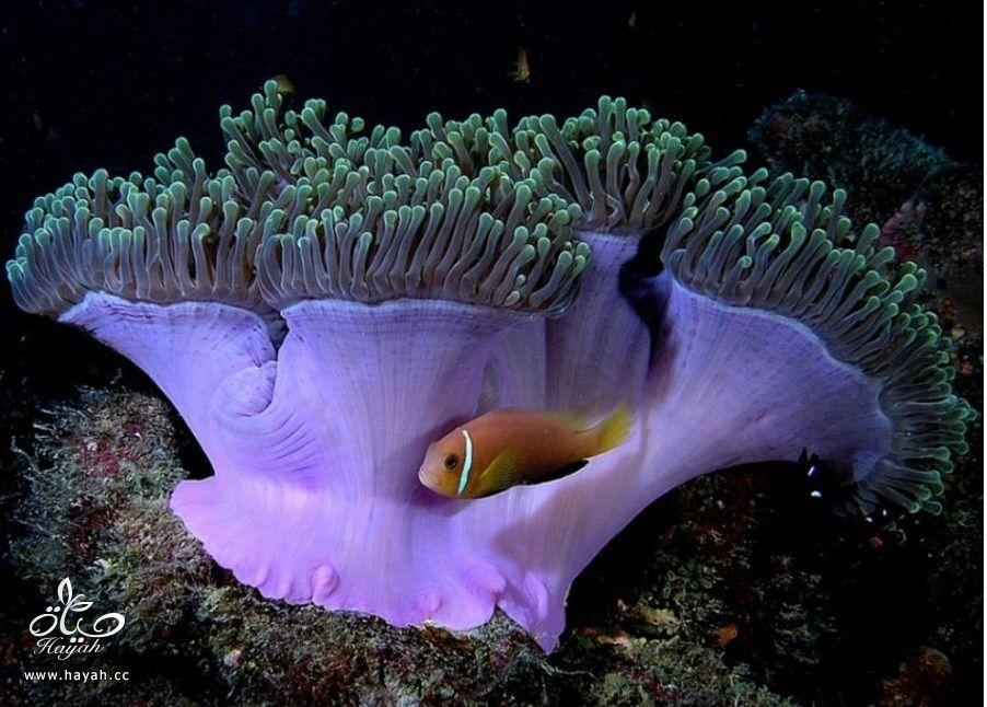 صور جمیله من عالم البحار hayahcc_1366730969_605.jpg
