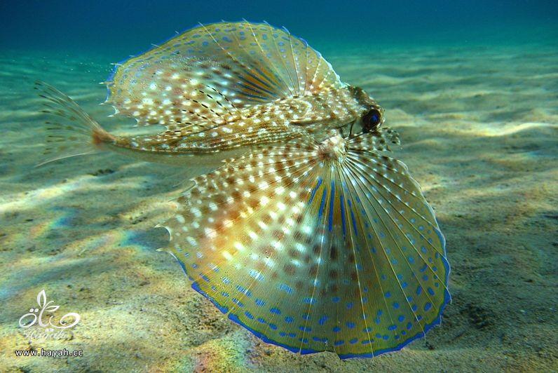 صور جمیله من عالم البحار hayahcc_1366730971_186.jpg