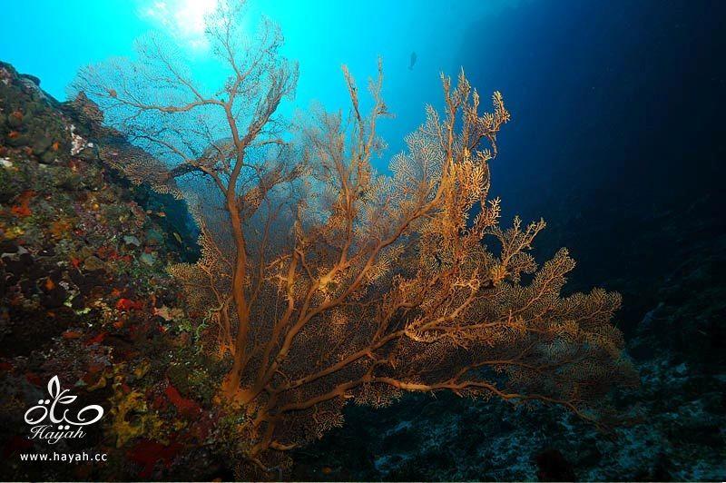 صور جمیله من عالم البحار hayahcc_1366730971_840.jpg