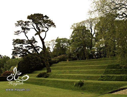 ديكورات حدائق منزلية لا مثيل لها بالصور حصريا hayahcc_1367584232_206.jpg