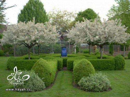 ديكورات حدائق منزلية لا مثيل لها بالصور حصريا hayahcc_1367584232_897.jpg