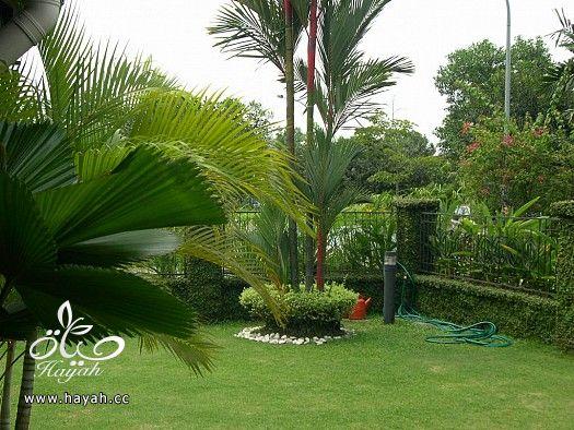 ديكورات حدائق منزلية لا مثيل لها بالصور حصريا hayahcc_1367584243_680.jpg