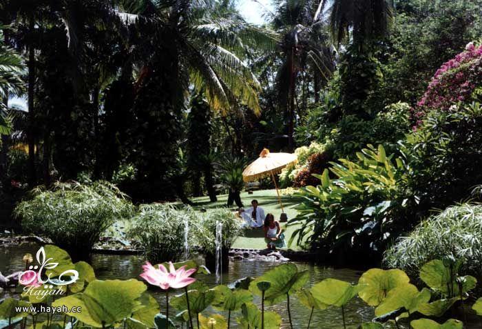 صور حدائق و مسابح منزلية في غاية الروعة hayahcc_1367624331_227.jpg