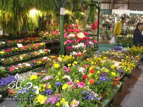 صور حدائق منزلية تجنن hayahcc_1368118776_929.jpg