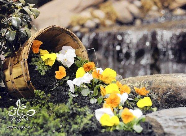 صور ديكورات حدائق منزليه زينه hayahcc_1368618358_480.jpg