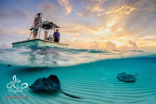 صور مدهشة من ناشونال جيوغرافيك  (35 صورة) hayahcc_1369584122_588.jpg
