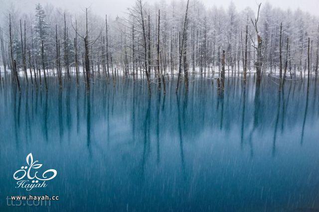 صور مدهشة من ناشونال جيوغرافيك  (35 صورة) hayahcc_1369584136_950.jpg
