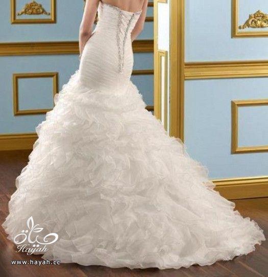فساتين زفاف حديثة hayahcc_1372270978_532.jpg