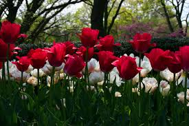 اسرار ولغة الورود hayahcc_1372995014_287.jpg