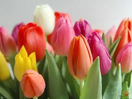 اسرار ولغة الورود hayahcc_1372995016_898.jpg