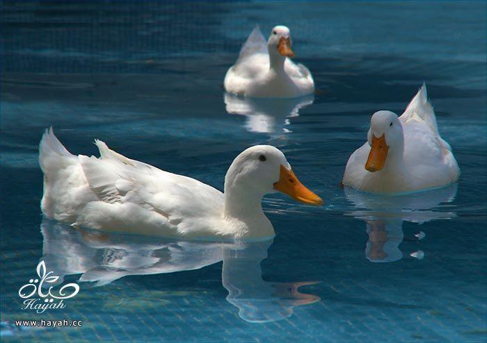 ثلاثه اصدقاء hayahcc_1373898891_941.jpg