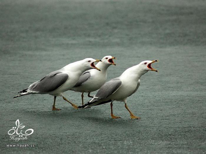 ثلاثه اصدقاء hayahcc_1373898892_233.jpg