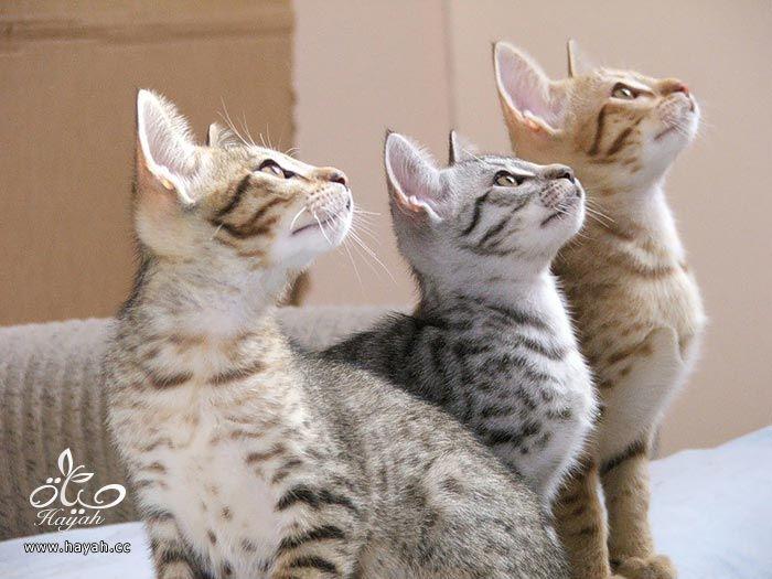 ثلاثه اصدقاء hayahcc_1373898893_135.jpg