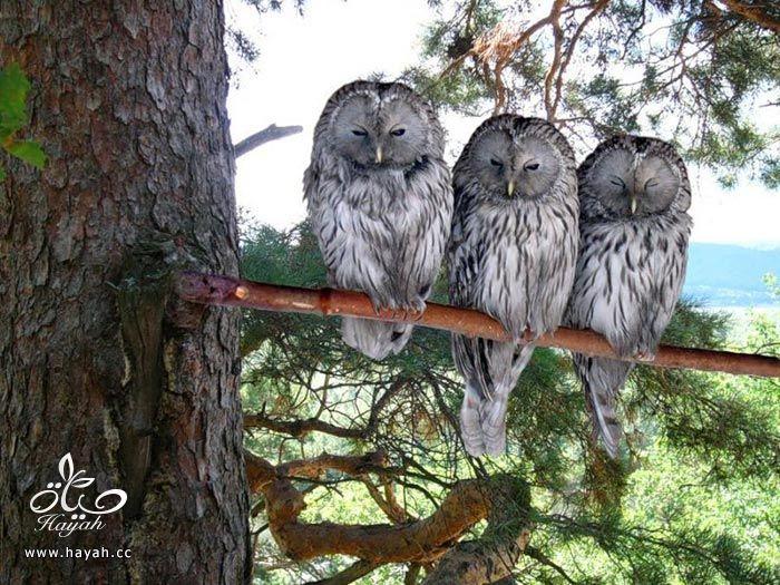 ثلاثه اصدقاء hayahcc_1373898893_590.jpg
