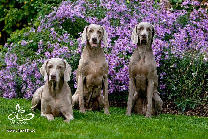 ثلاثه اصدقاء hayahcc_1373898894_655.jpg