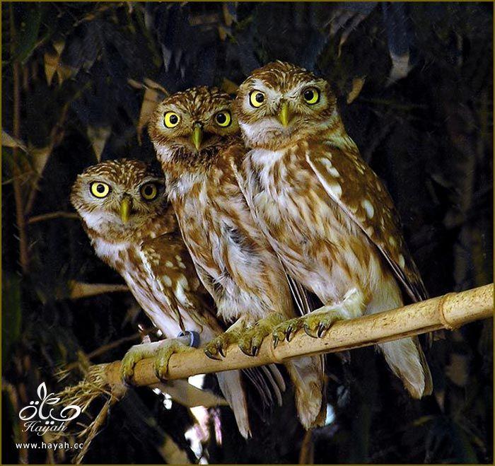 ثلاثه اصدقاء hayahcc_1373898895_277.jpg