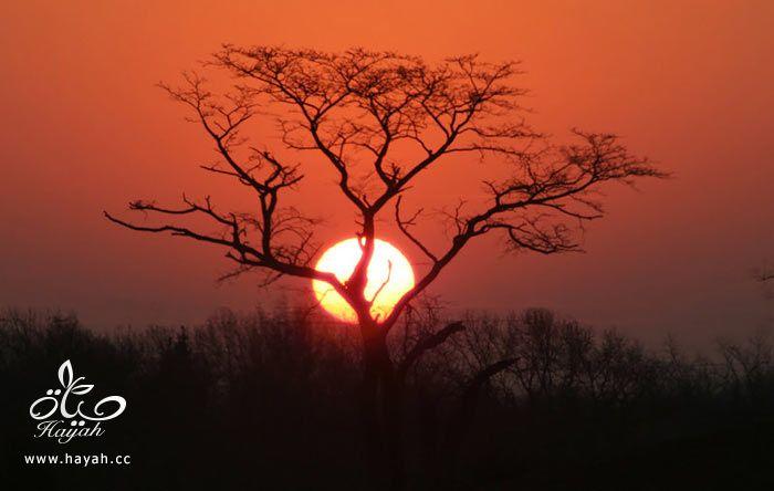 طلوع وغروب الشمس hayahcc_1374850039_501.jpg