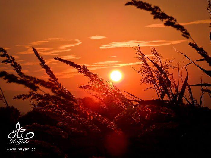 طلوع وغروب الشمس hayahcc_1374850044_653.jpg