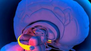 اكتشاف البروتين الذي قد يكون مسؤولا عن فقدان الذاكرة hayahcc_1378734439_966.jpg