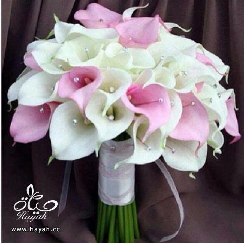 مسكات عروس باشكال جديده hayahcc_1390666370_398.png