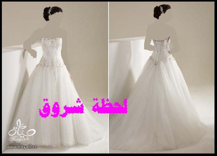 hayahcc_1394491974_772.jpg