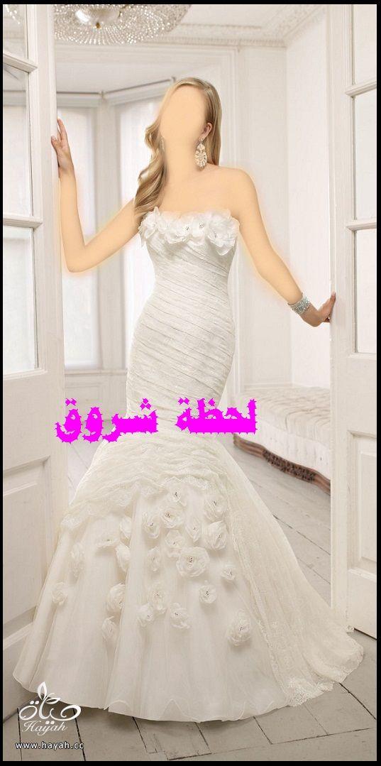 hayahcc_1394492006_649.jpg