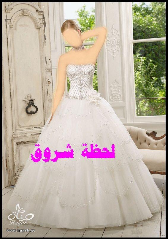 hayahcc_1394492006_779.jpg