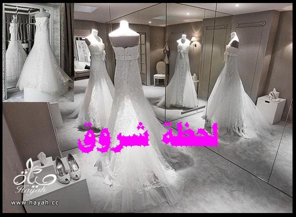 hayahcc_1394492039_401.jpg