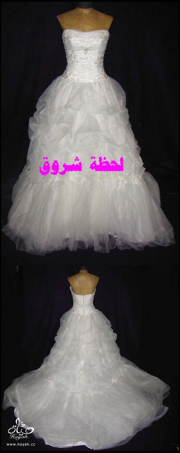 hayahcc_1394492073_534.jpg