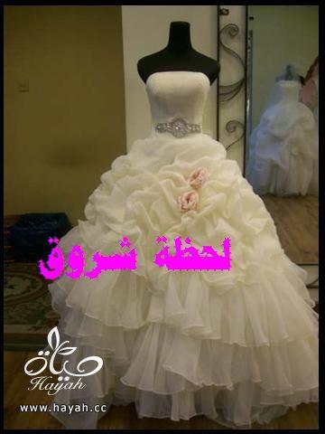 hayahcc_1394492138_482.jpg