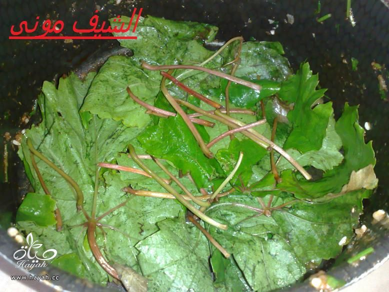 محشى ورق عنب للمبتدئات من مطبخ الشيف مونى بالصور hayahcc_1397297764_633.jpg