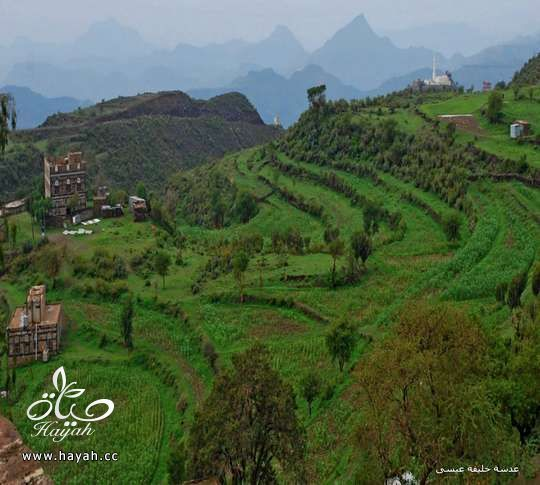 أجمل مناظر مدينة إب ( عاصمة اليمن السياحية ) hayahcc_1410884827_721.jpg