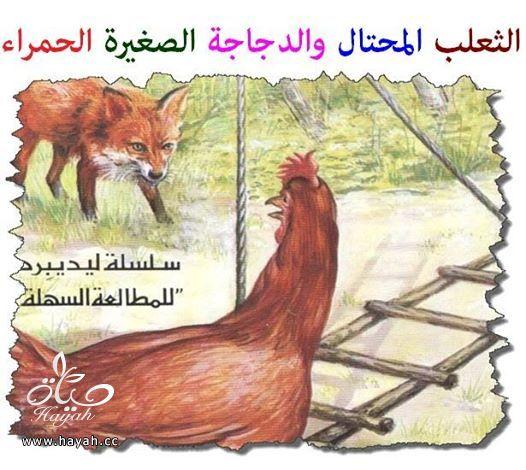 قصة الثعلب المحتال والدجاجة الصغيرة الحمراء hayahcc_1413301941_771.jpg