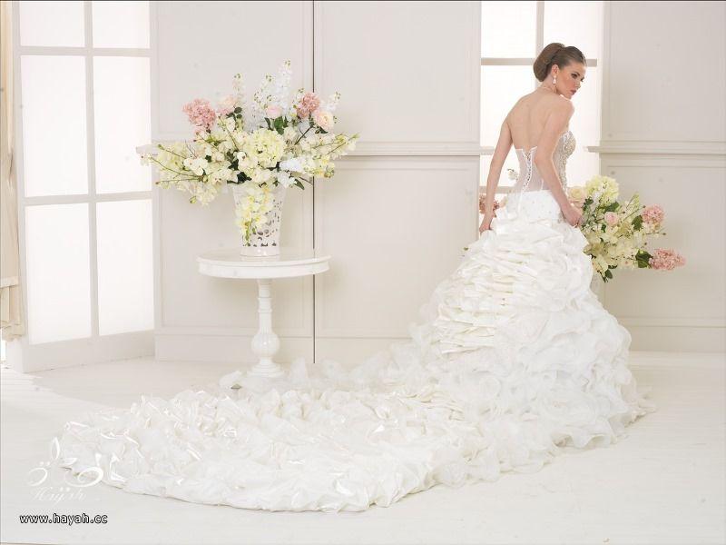 أطياف العروسة للأزياء ( صور بعض الموديلات ) hayahcc_1419061789_724.jpg