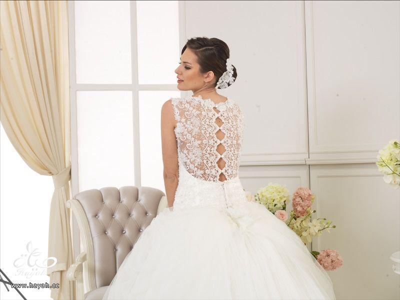 أطياف العروسة للأزياء ( صور بعض الموديلات ) hayahcc_1419061789_990.jpg