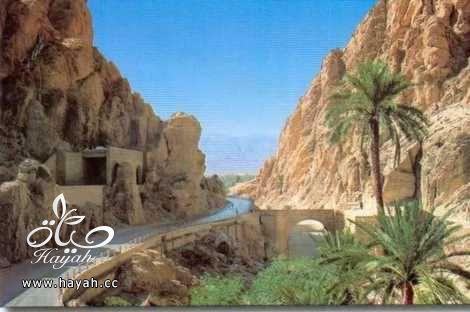 رحلة بالصور الى الجزائر hayahcc_1419940614_554.jpg