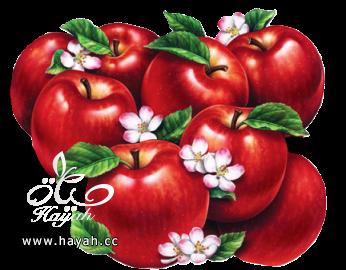 اعداد خل التفاح المنزلي hayahcc_1420569735_373.png