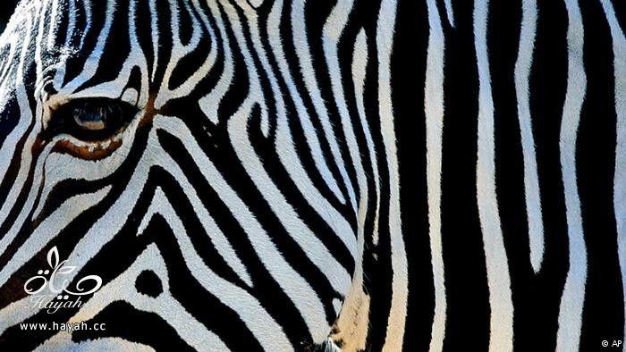 ابداع الحيوانات في التخفي hayahcc_1423896782_636.jpg
