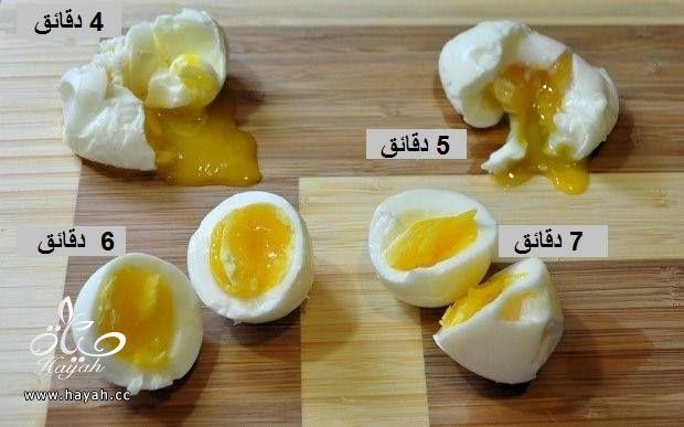 مراحل نضوج البيض hayahcc_1423976878_936.jpg