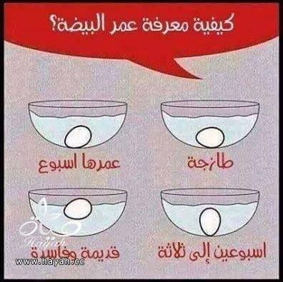 كيف اعرف حالة البيض؟ hayahcc_1425546586_687.jpg