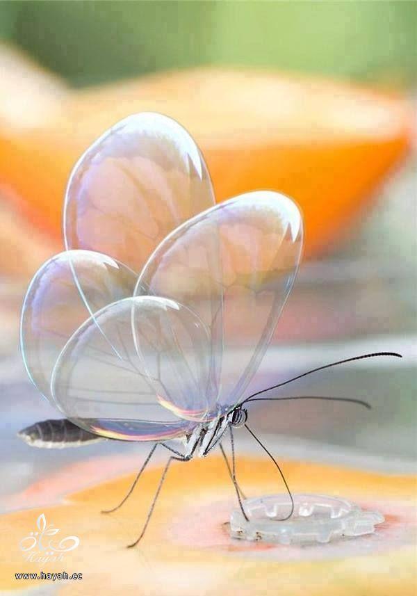 حيوانات شفافة سبحان الخالق hayahcc_1425802036_948.jpg