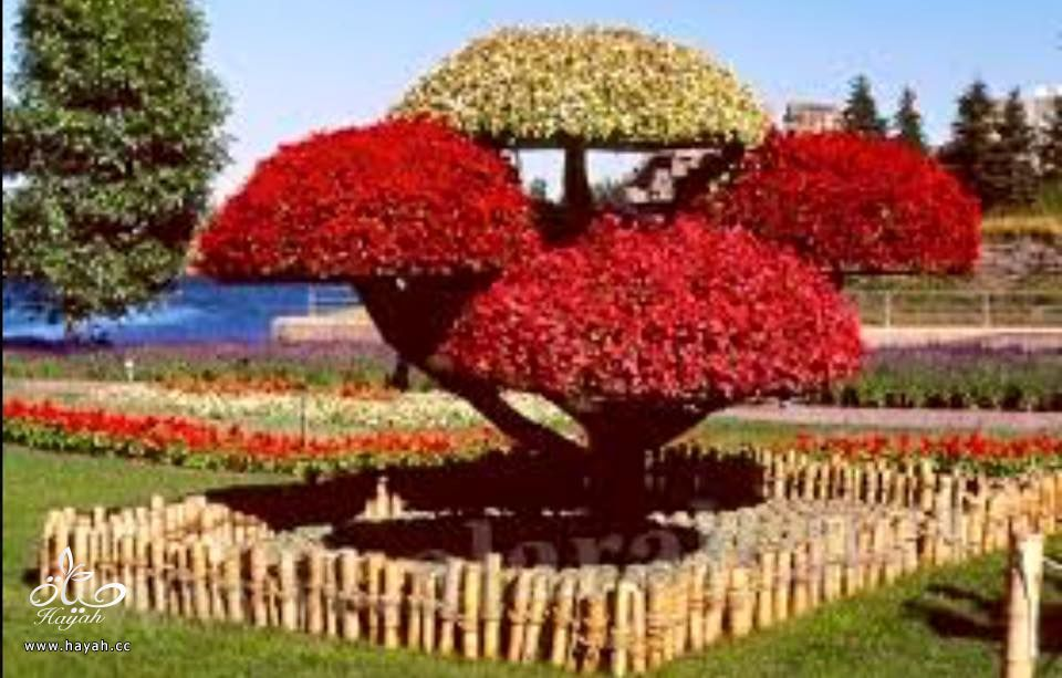 أروع الحدائق الطبيعية hayahcc_1426664391_408.jpg