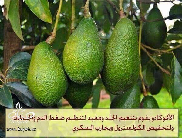 هل تعرفين فوائد هذه النباتات ؟ hayahcc_1426931241_962.jpg