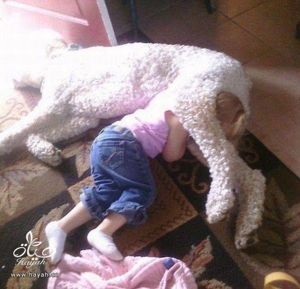 أطفالٌ لا يقاومون النوم hayahcc_1427521030_102.jpg