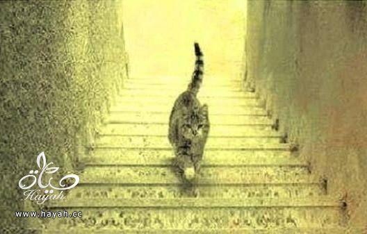هذه القطة تصعد أم تنزل الدرج ؟ hayahcc_1428834152_256.jpg