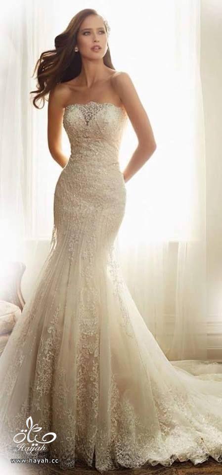 أحدث فساتين الزفاف hayahcc_1432634029_219.jpg