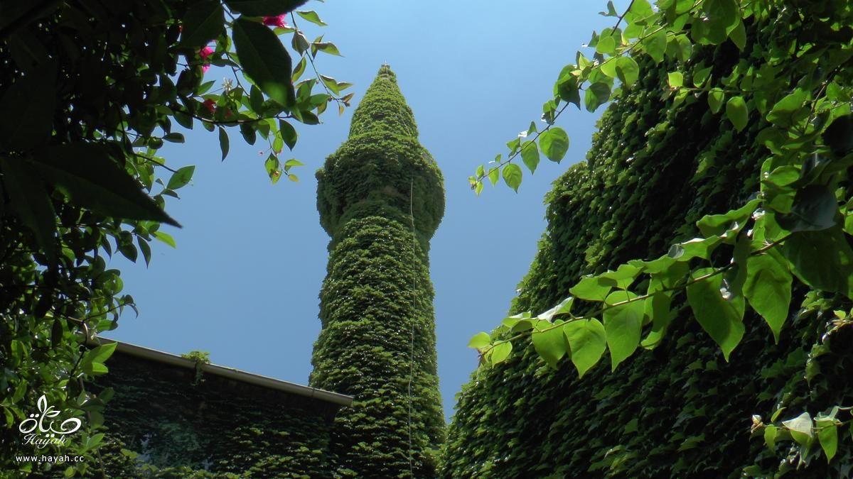 مسجد تغطيه النباتات بشكل كامل hayahcc_1436098125_529.jpg