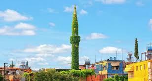 مسجد تغطيه النباتات بشكل كامل hayahcc_1436098125_675.jpg